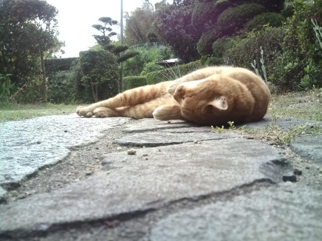 転がって甘える猫のぐり