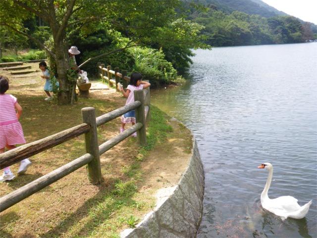 深坂自然公園の白鳥