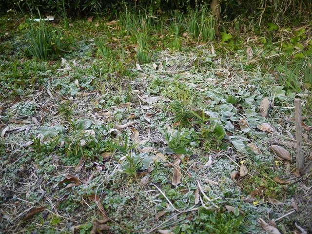 下関で霜が降りました