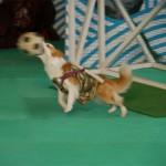 ゴールキーパー犬